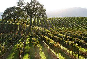 马里兰州产区的葡萄园
