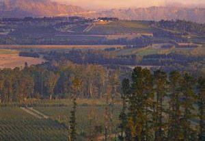 斯特兰德产区的葡萄园