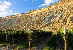 科罗拉多州的葡萄园
